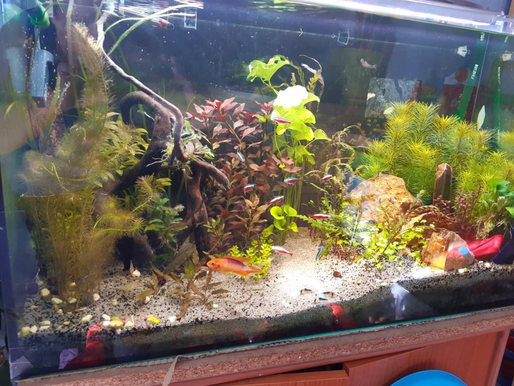 Aquarium Cynthia89190 - Page 2 20200815
