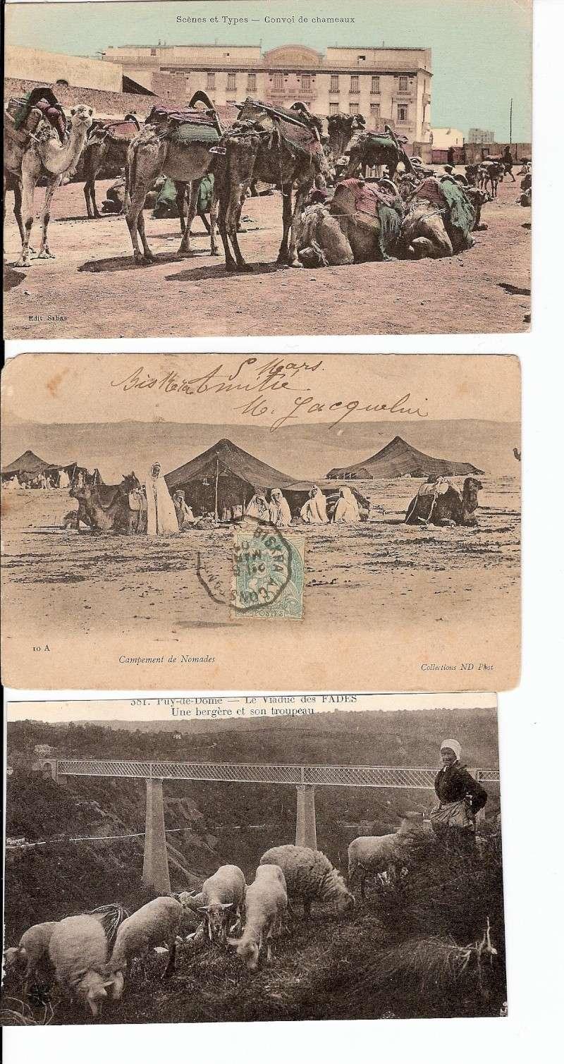 cartes postales d'algerie - Page 6 Numari13