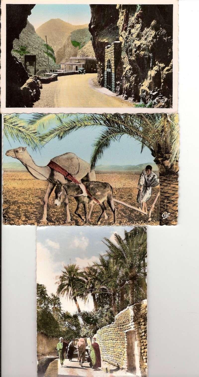 cartes postales d'algerie - Page 6 Scann183
