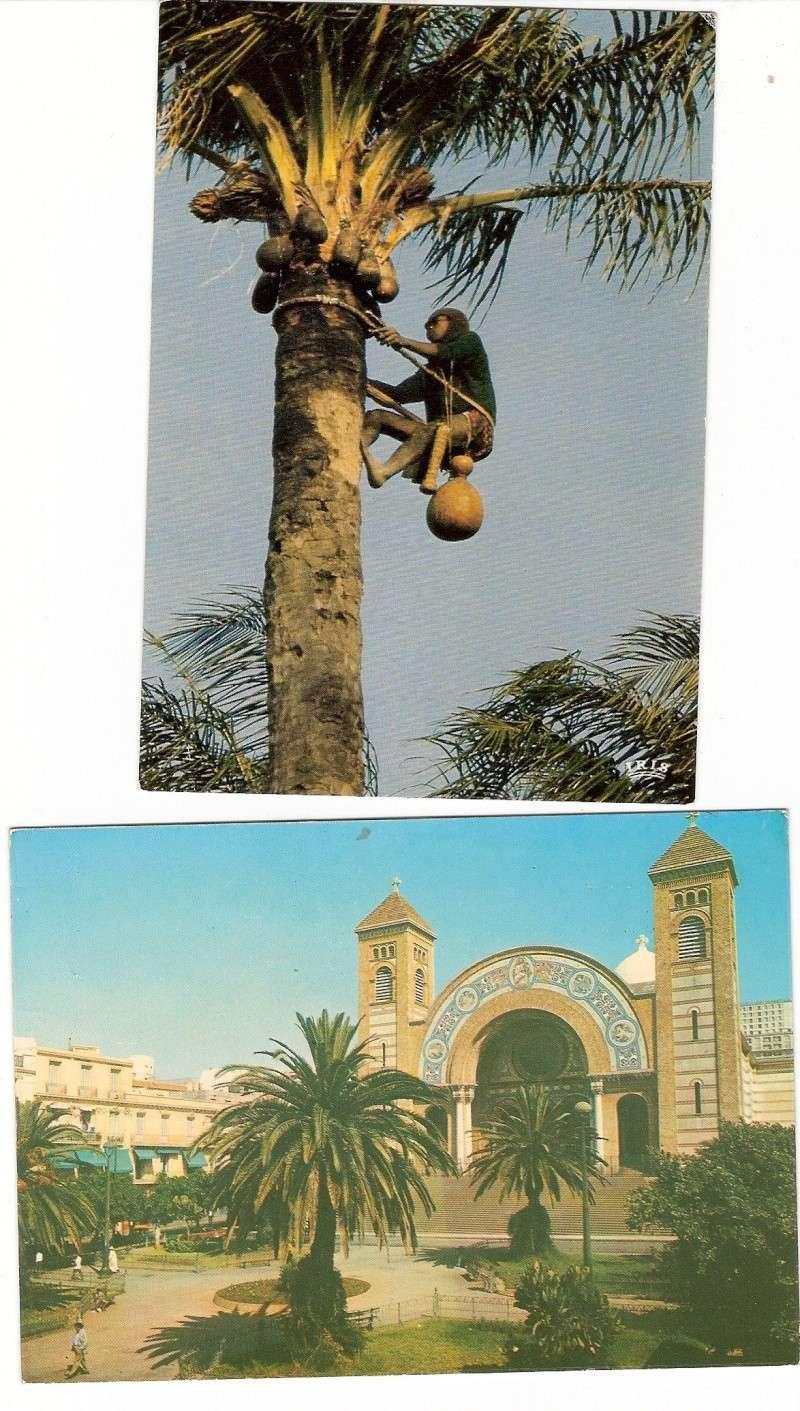 cartes postales d'algerie - Page 6 Scann189