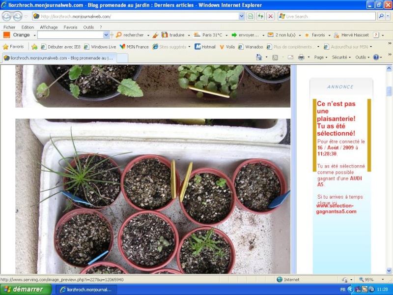 Présentation du blog Copiea11