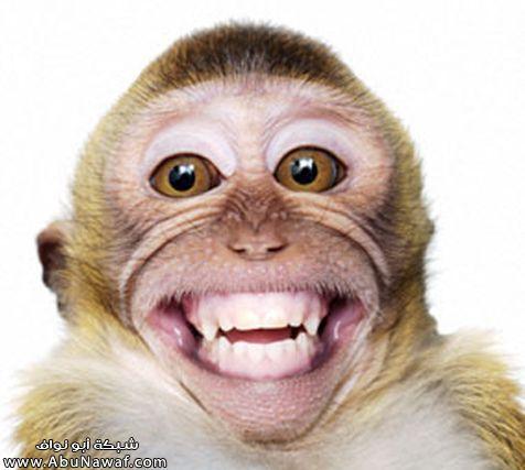 ابتسامة يومية Item-b10