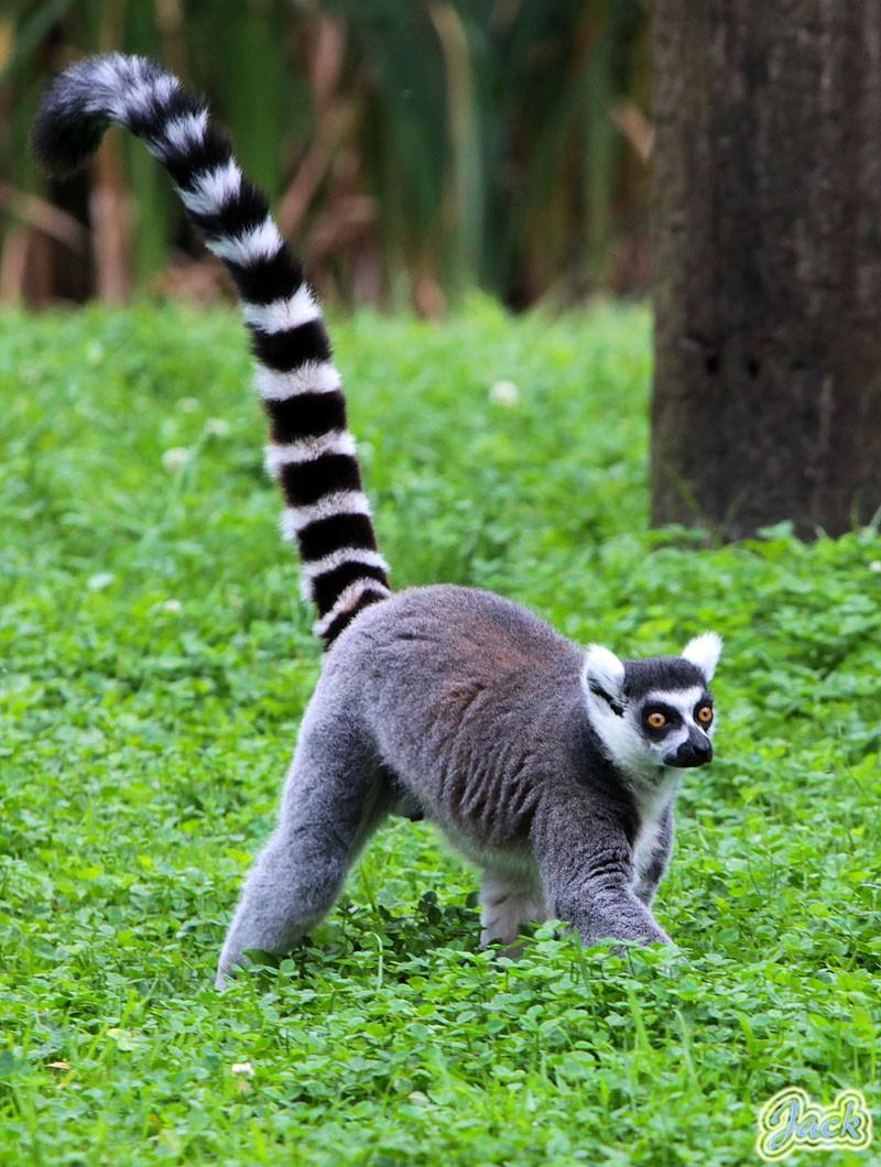 Sortie Animaux au Zoo d'Olmen le 16 août - Les photos 221410