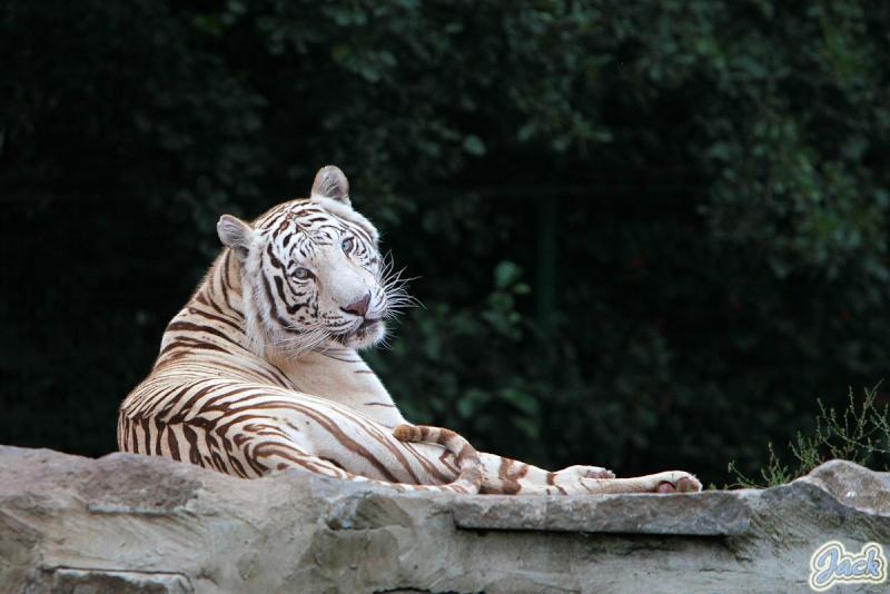 Sortie Animaux au Zoo d'Olmen le 16 août - Les photos 224910