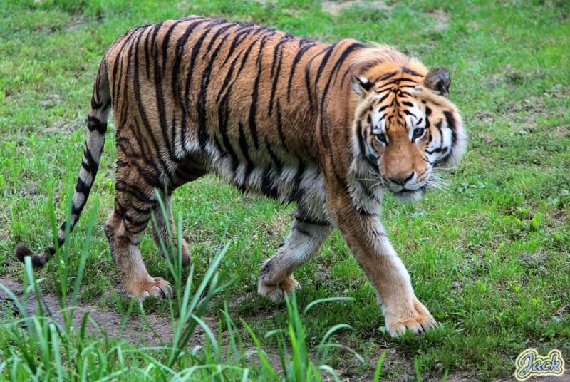 Sortie Animaux au Zoo d'Olmen le 16 août - Les photos 225310