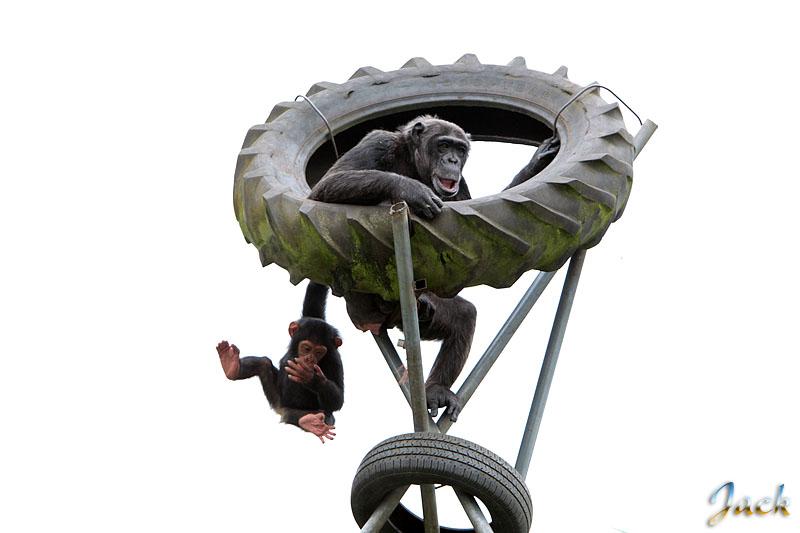 Sortie Animaux au Zoo d'Olmen le 16 août - Les photos d'ambiances 233510