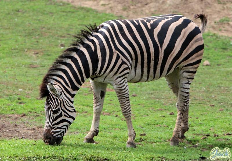Sortie Animaux au Zoo d'Olmen le 16 août - Les photos 239510