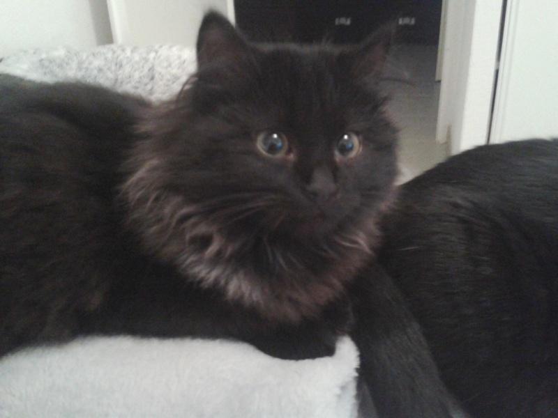 chatte noire en culotte pics