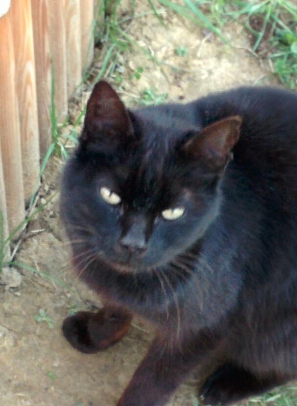 Trouvé chat noir à Pibrac Img_2010
