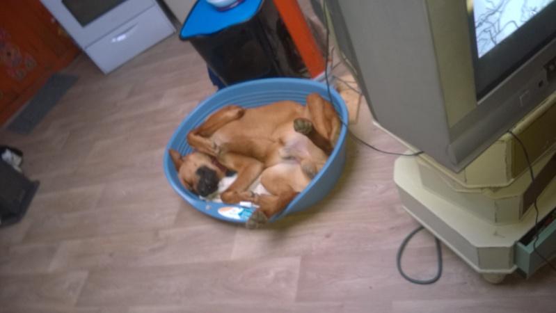 Le journal d'un chien    Wp_20110