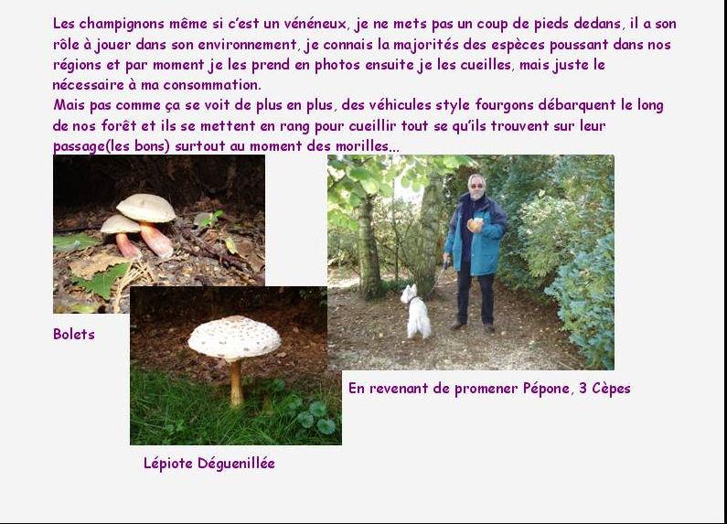 Promenade en Forêt En_for13