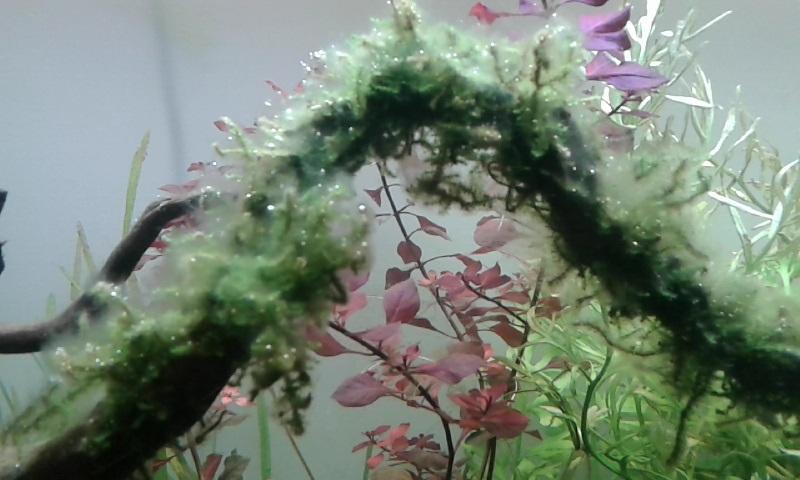 Identification d'une algue Algues10