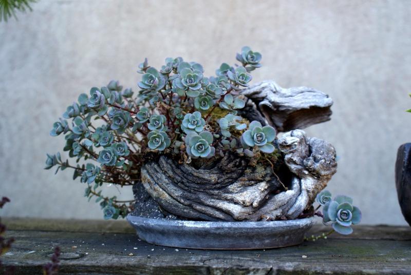 Voici mes plantes d'accompagnements Fleurs10