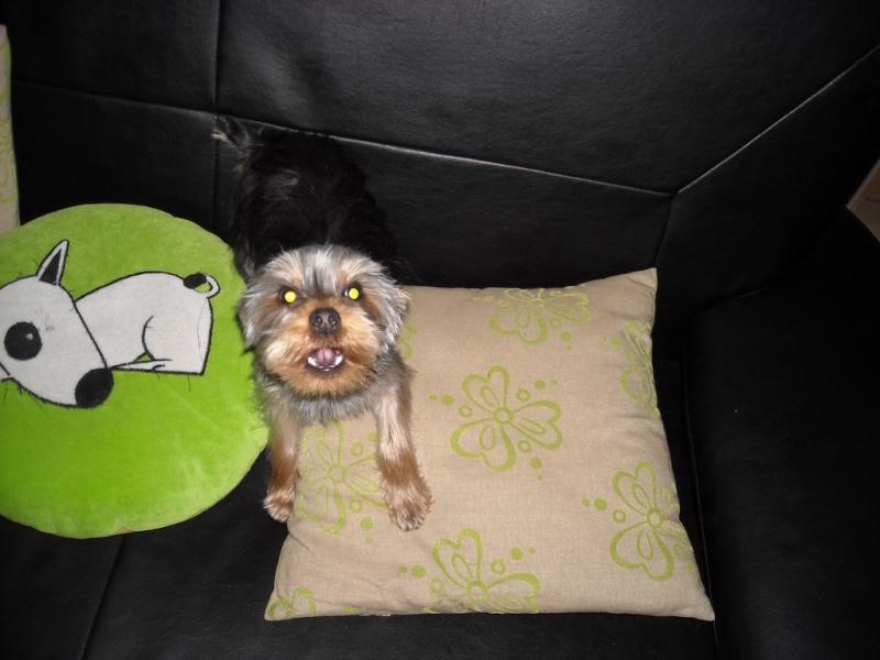 Viendez tous chez Sebz : le topic des bons amis des animaux Dscn0311