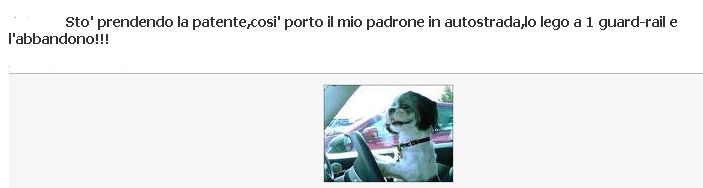 Patente per cani....... Abband10
