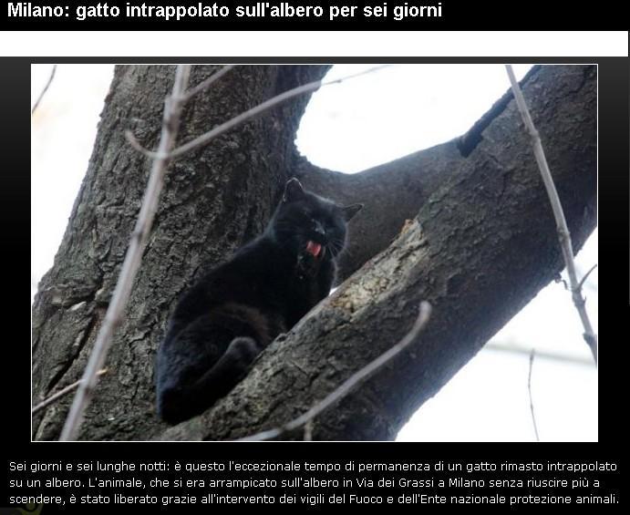 Salvataggio.............. Gatto11