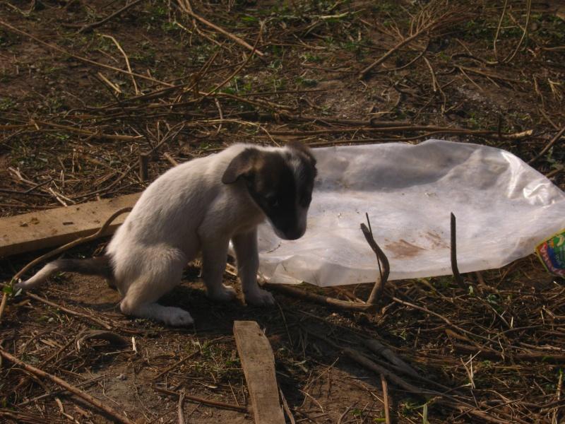 Eclair, petit chiot (femelle) chien de tina Img_1419