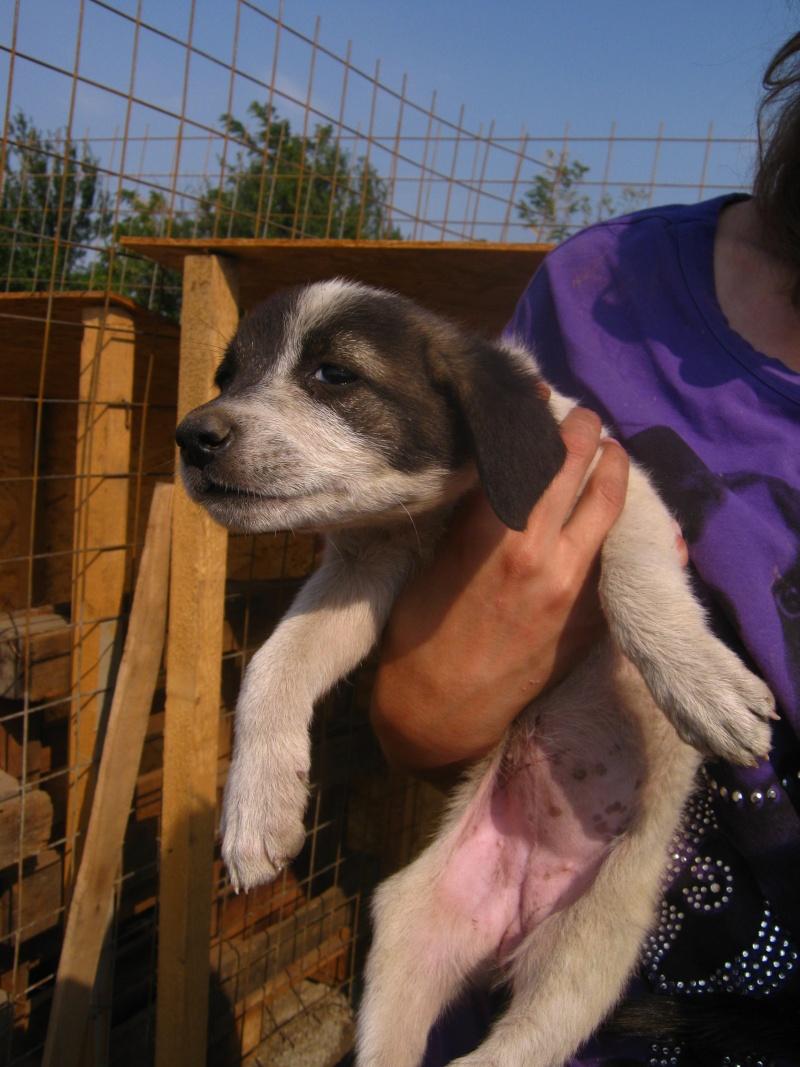 Eclair, petit chiot (femelle) chien de tina Img_1423