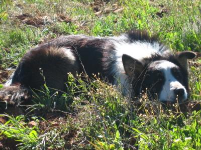 chien - présentation de JUSS, chien traumatisé  - Page 9 Img_0014