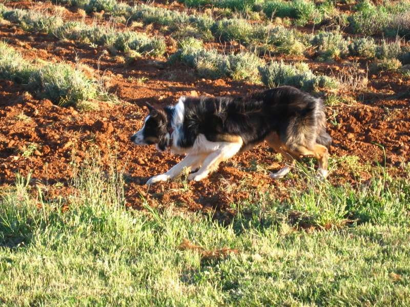 chien - présentation de JUSS, chien traumatisé  - Page 9 Img_0120