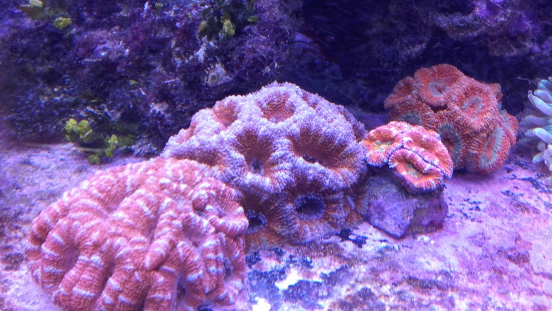vos plus vieux coraux 20160312