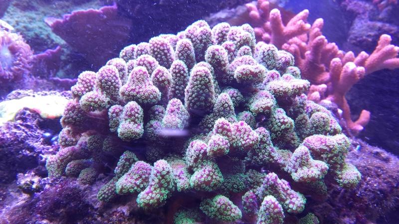 vos plus vieux coraux 20160314