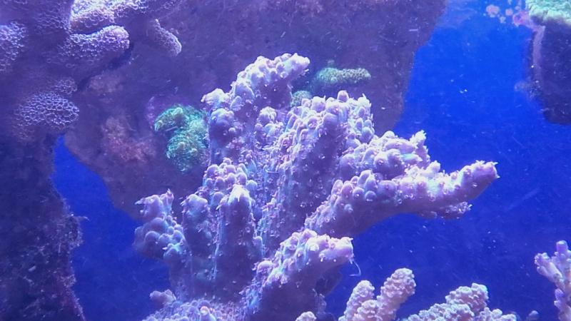 vos plus vieux coraux 20160316