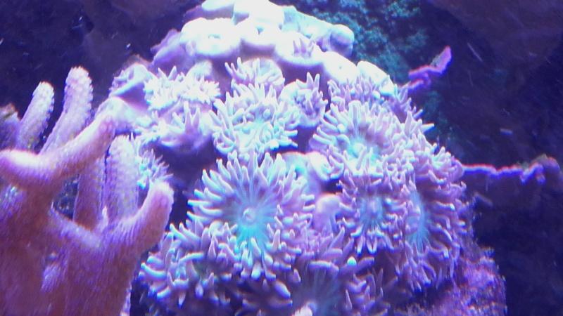 vos plus vieux coraux 20160319