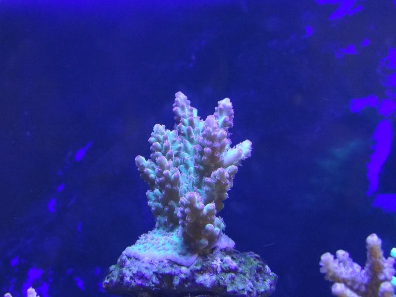vos plus vieux coraux Dsc00210
