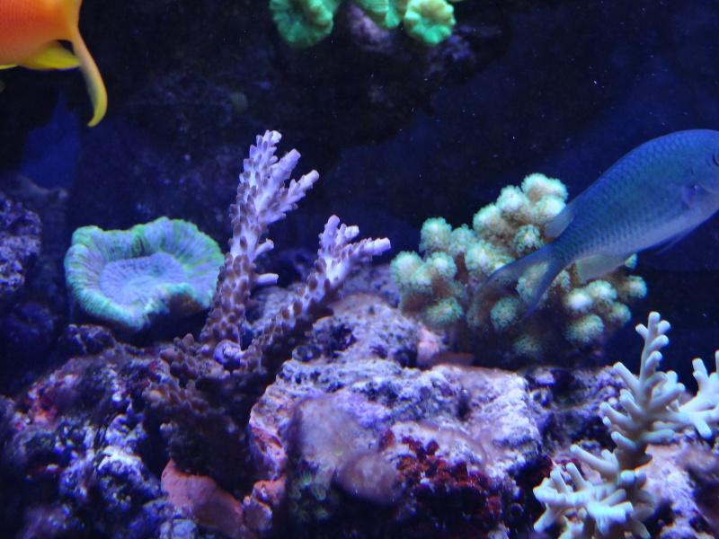 vos plus vieux coraux Dsc00310