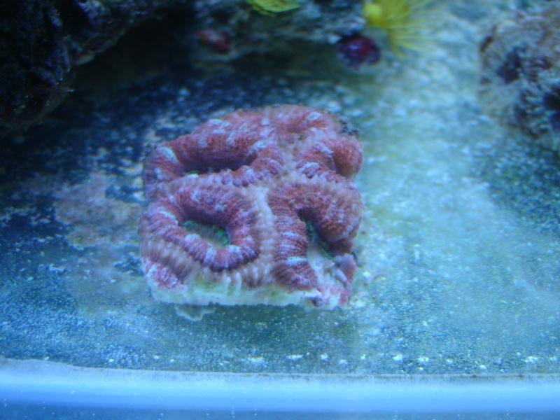 vos plus vieux coraux Dsc02210