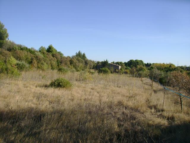 JdB de 4 hectares de pâtures dans le SUD : Timide reprise après 8 mois de sécheresse 003oct10