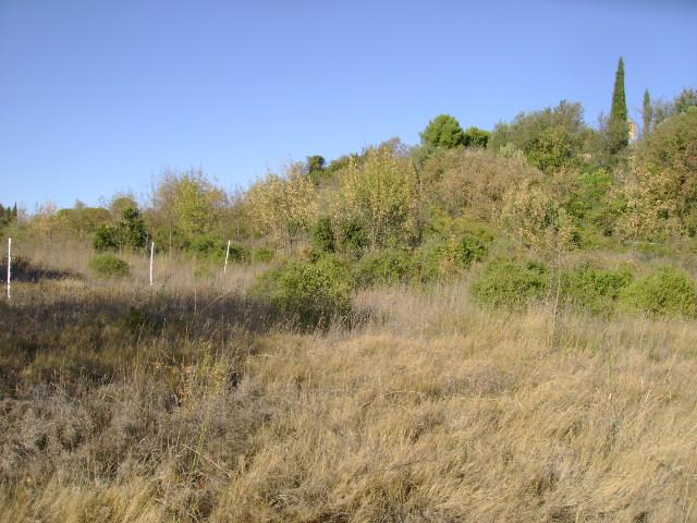 JdB de 4 hectares de pâtures dans le SUD : Timide reprise après 8 mois de sécheresse 006oct10