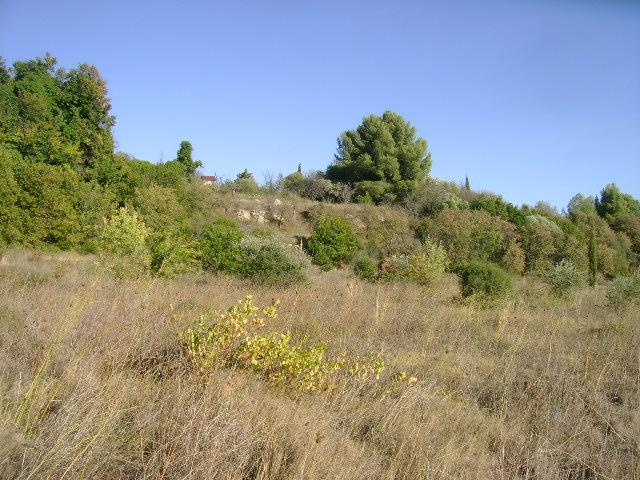 JdB de 4 hectares de pâtures dans le SUD : Timide reprise après 8 mois de sécheresse 008oct10