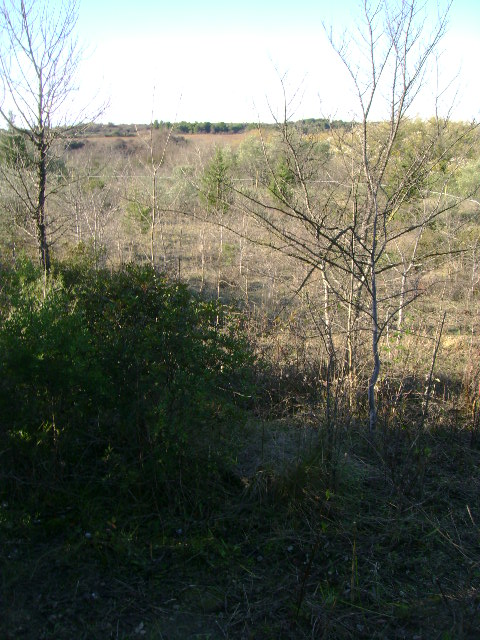 JdB de 4 hectares de pâtures dans le SUD : Janvier à la diète... + expérimentation 056dec10