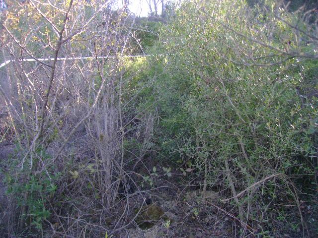JdB de 4 hectares de pâtures dans le SUD : Janvier à la diète... + expérimentation 057dec10