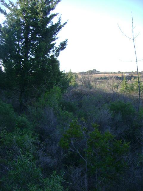 JdB de 4 hectares de pâtures dans le SUD : Janvier à la diète... + expérimentation 058dec10