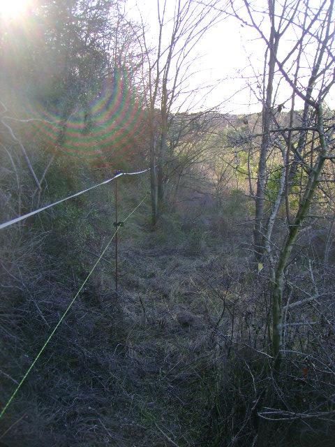 JdB de 4 hectares de pâtures dans le SUD : Janvier à la diète... + expérimentation 059dec10