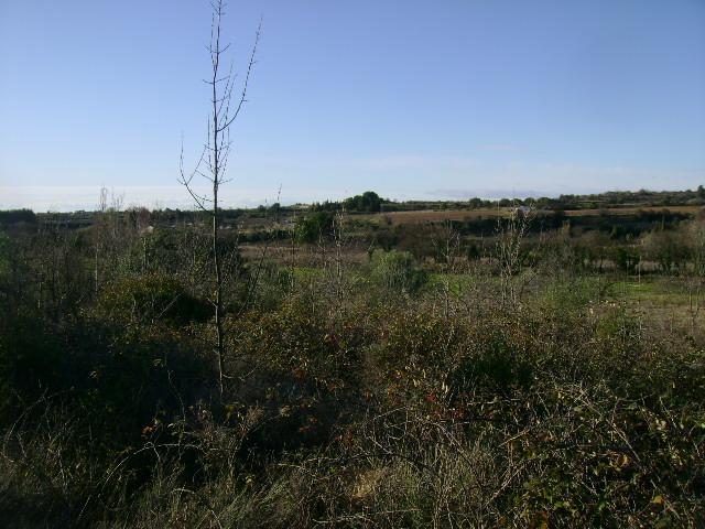 JdB de 4 hectares de pâtures dans le SUD : Janvier à la diète... + expérimentation 060dec10