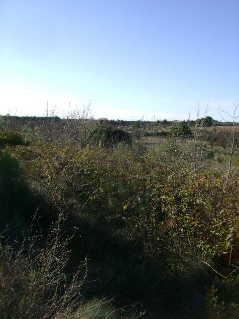 JdB de 4 hectares de pâtures dans le SUD : Janvier à la diète... + expérimentation 061dec10