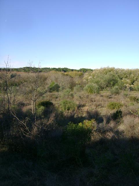 JdB de 4 hectares de pâtures dans le SUD : Janvier à la diète... + expérimentation 062dec10