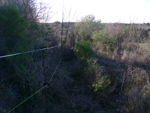 JdB de 4 hectares de pâtures dans le SUD : Janvier à la diète... + expérimentation 063dec10