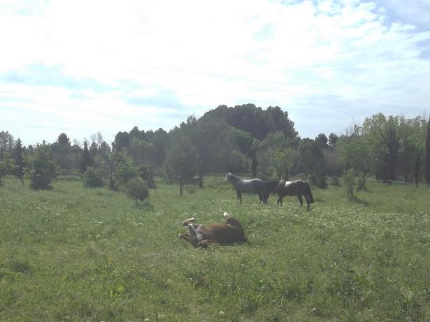 JdB de 4 hectares de pâtures dans le SUD : Timide reprise après 8 mois de sécheresse 100_1510