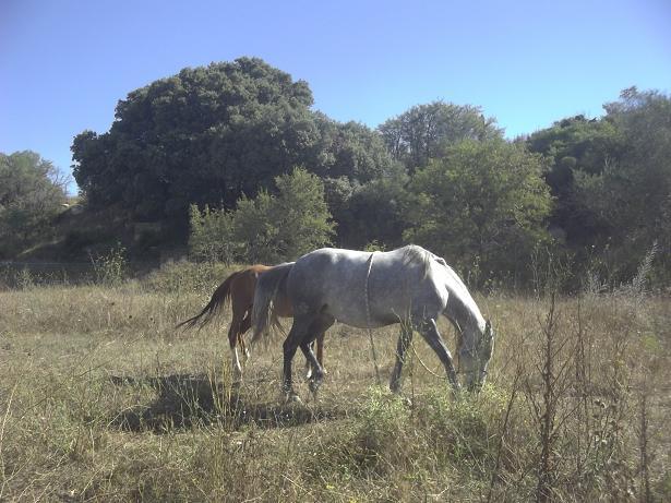 JdB de 4 hectares de pâtures dans le SUD : Timide reprise après 8 mois de sécheresse 100_1511