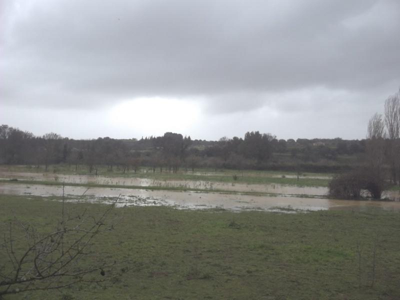 JdB de 4 hectares de pâtures dans le SUD : Janvier à la diète... + expérimentation 100_2010