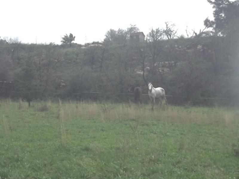 JdB de 4 hectares de pâtures dans le SUD : Janvier à la diète... + expérimentation 100_2011