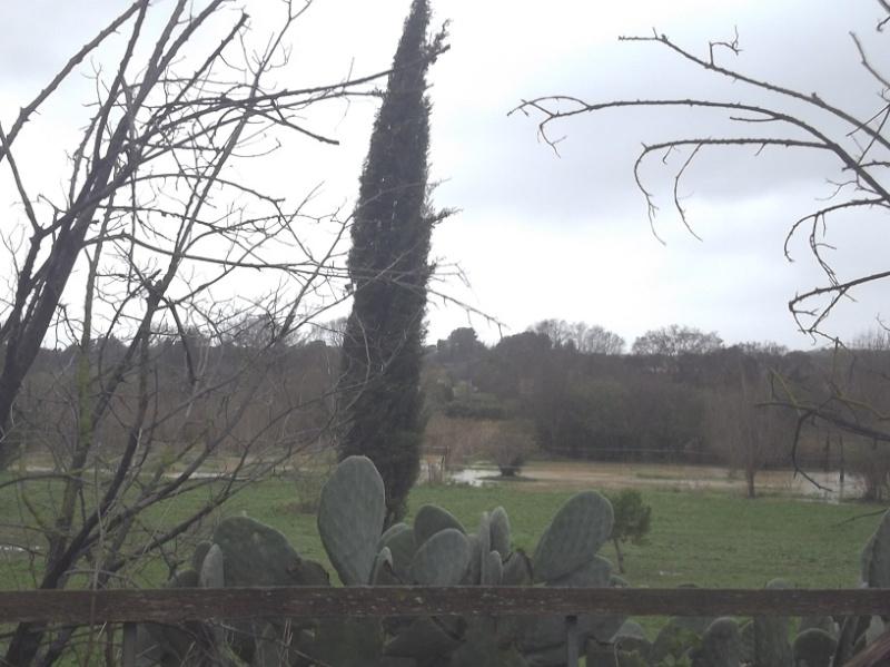 JdB de 4 hectares de pâtures dans le SUD : Janvier à la diète... + expérimentation 100_2012