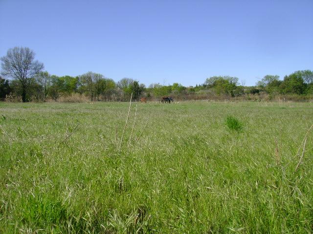 JdB de 4 hectares de pâtures dans le SUD : Janvier à la diète... + expérimentation 113avr10