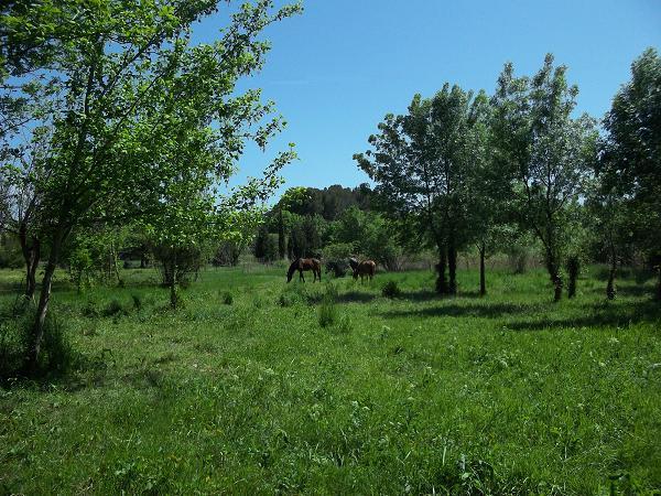 JdB de 4 hectares de pâtures dans le SUD : Janvier à la diète... + expérimentation 123avr10