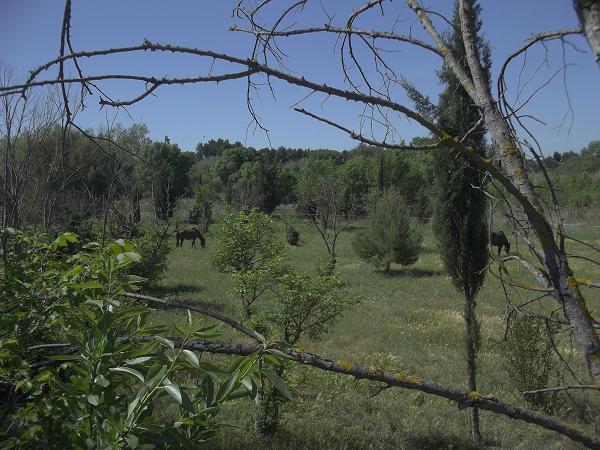 JdB de 4 hectares de pâtures dans le SUD : Janvier à la diète... + expérimentation 125mai10